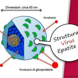 Il virus dell'epatite C